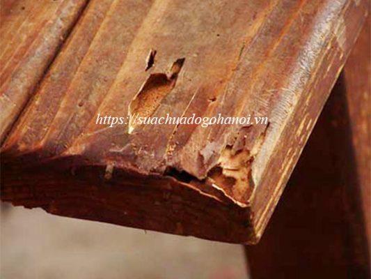 Mối mọt gây hại bàn ghế gỗ